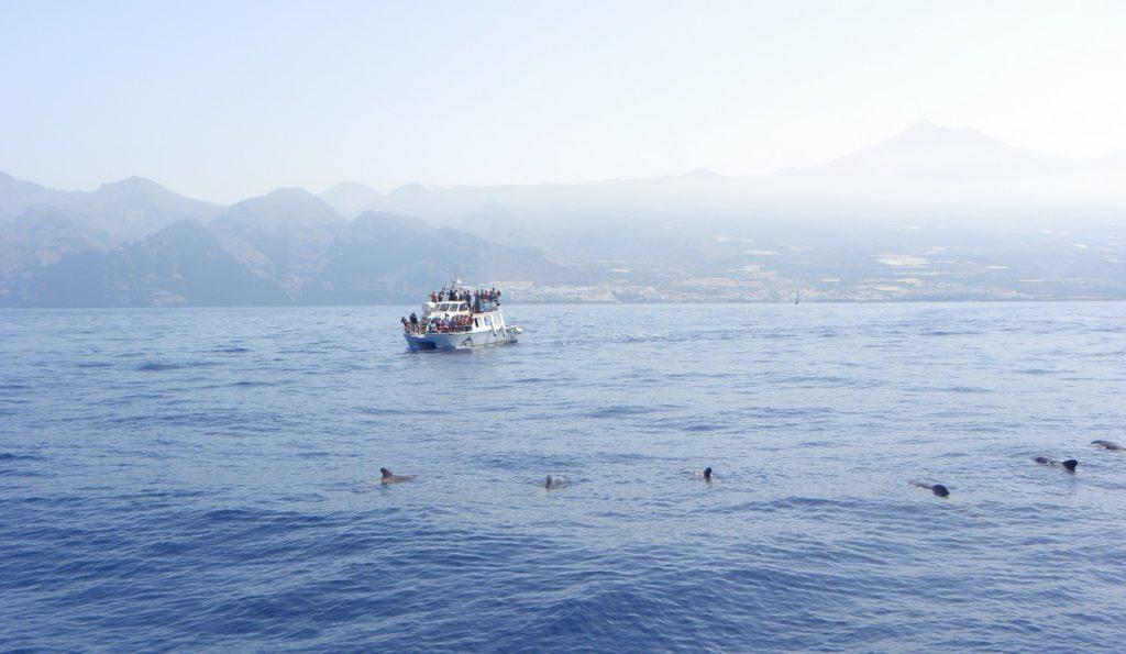 excursion bateau dauphins baleines tenerife canaries