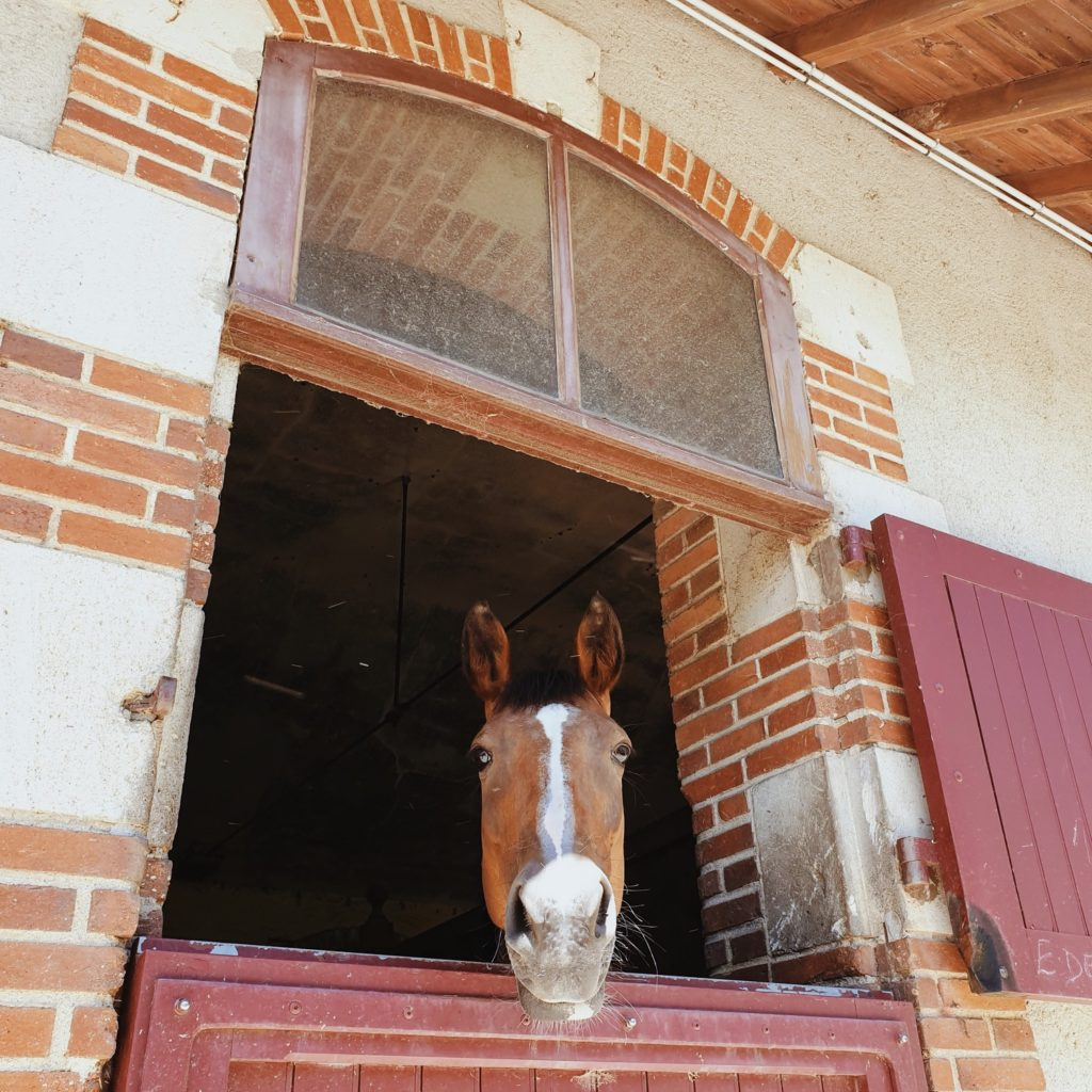 chevaux haras de la vendee la roche sur yon