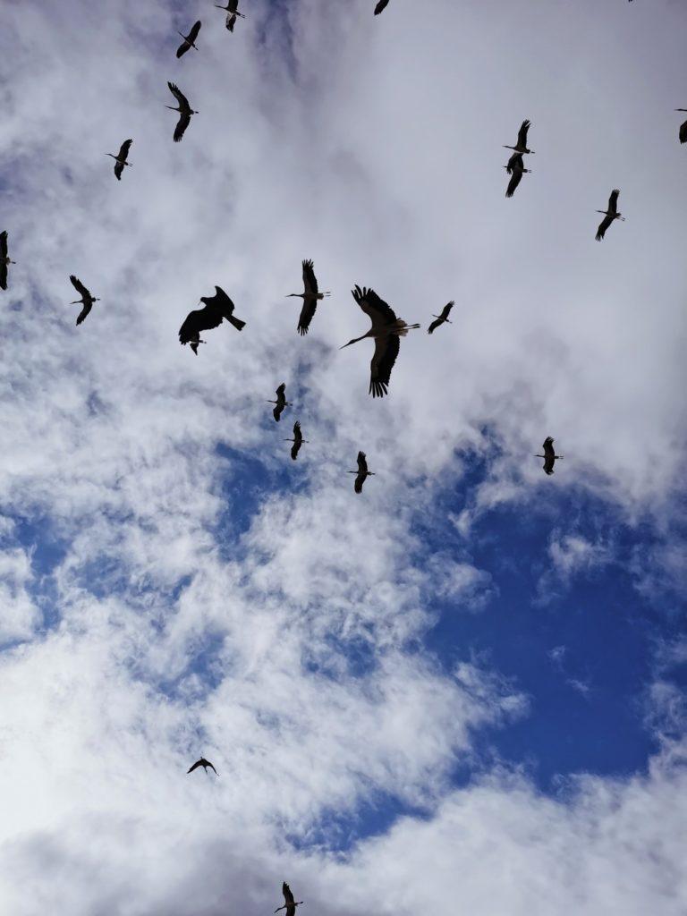 bal des oiseaux fantomes puy du fou